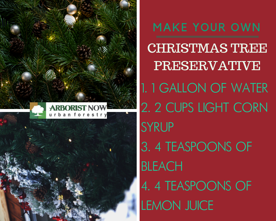 Christmas Tree Preservative.Taking Care Of Your Evergreen Christmas Tree In A Warm